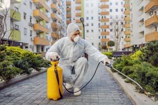 Faça o controle de pragas urbanas com a Insetbom