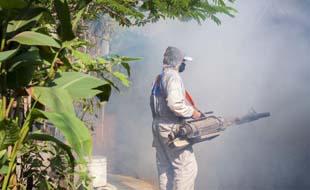 Combate contra a dengue: confira dicas para eliminar o mosquito