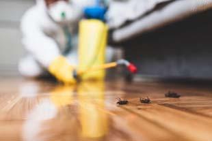 Controle de baratas: dicas para encontrar uma boa empresa