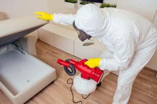 Controle de insetos: saiba como eliminá-los de uma vez