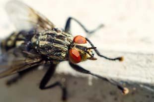 Controle de moscas: saiba qual a solução mais eficiente