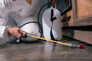 Controle de pragas: saiba como tomar medidas preventivas