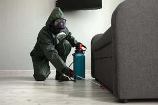 Dedetização de insetos: melhor forma para exterminar a pragas