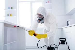 Dedetização residencial: melhor forma de controle de pragas