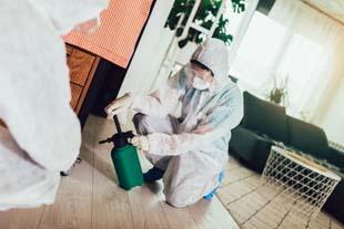 Dedetizar formiga: solução contra esta praga